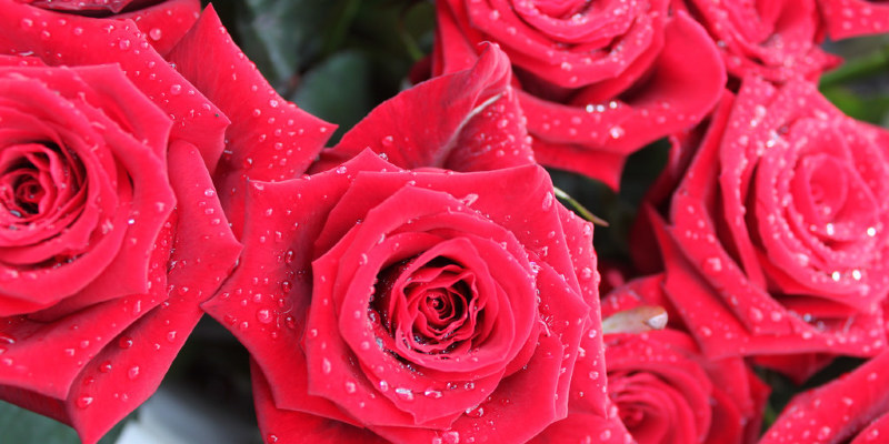 Expert Pruning Secrets for Exquisite Roses