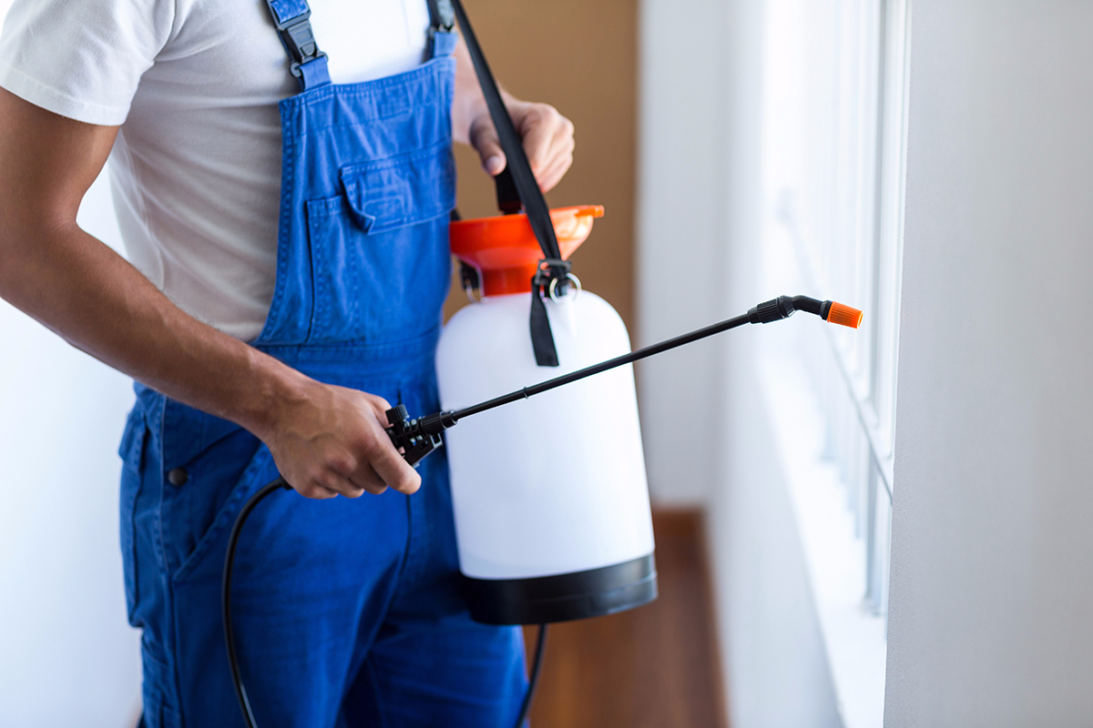 How to Know If You Really Need Professional Pest Control Services