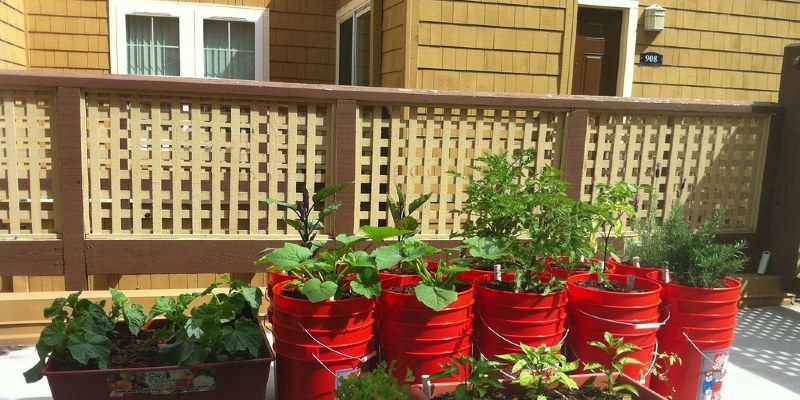 How to Produce Your Oceanfront Garden Thrive